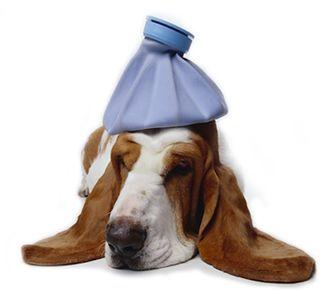 Sickasadog